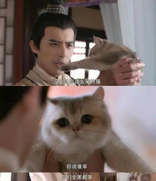 """看完《我在大理寺当宠物》好想养喵星人,""""云养猫""""你试过吗? 图片7"""
