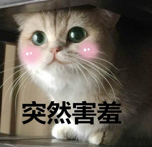 """看完《我在大理寺当宠物》好想养喵星人,""""云养猫""""你试过吗? 图片8"""